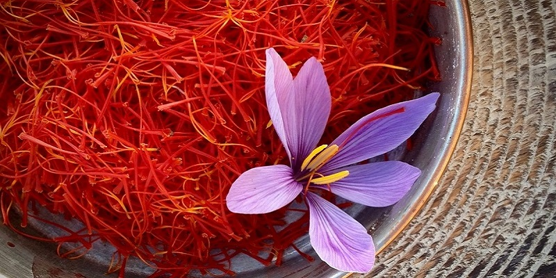 Paktia Province is the most suitable region for saffron cultivation